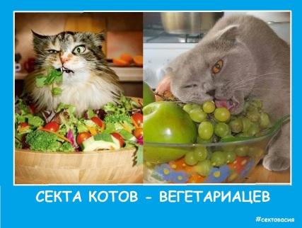 Секта-котов вегетарианцев