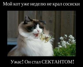 Мой кот сектант