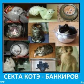 Секта котэ банкиров - Сектовасия