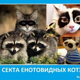 Секта енотовидных котэ - Сектовасия