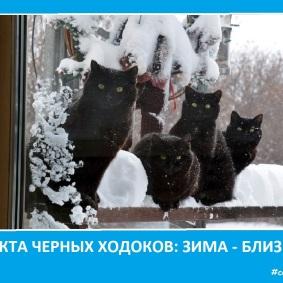 Секта котэ - черных ходоков- Сектовасия