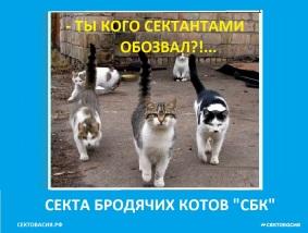 Секта СБК - Секта бродячих котов Сектовасии