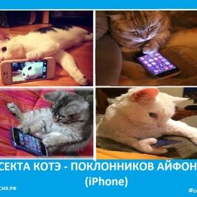 Секта котэ - поклонников Айфон