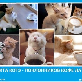 Секта котэ - поклонников кофе Латте. Сектовасия