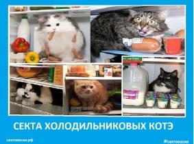 Секта холодильниковых котов. Сектовасия