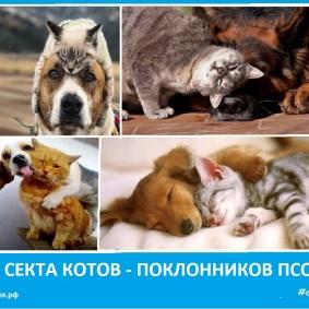 Секта котов - поклонников псов. Новости Сектовасии