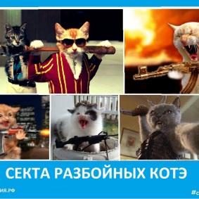 Секта котэ разбойников - Сектовасия