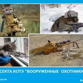 Секта котов охотников - Сектовасия
