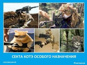 Секта котэ спецназа - Сектовасия