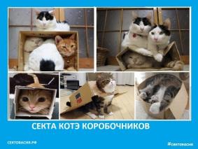 Секта котов коробочников Сектовасия