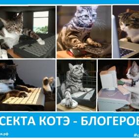 Секта котэ - блогегов - Сектовасия