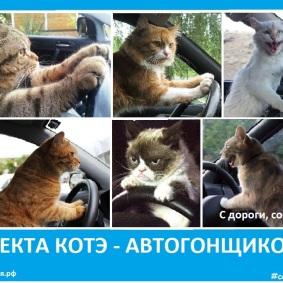 Секта котов автогонщиков - Сектовасия - Новые секты в России