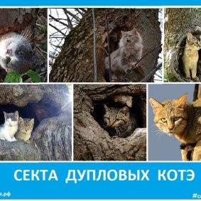 Секта дупловых котэ - Сектовасия. Новости сект