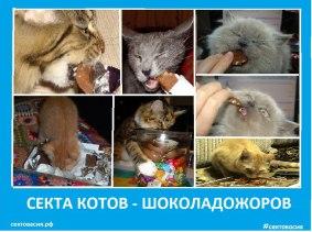 Секта котов - шоколадожоров - Сектовасия