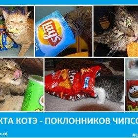 Секта котэ - поклонников чипсов. Сектовасия