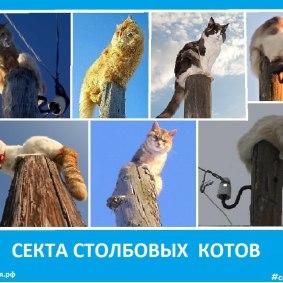 Секта столбовых котов - Сектовасия. Новости