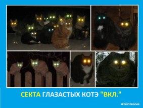 Секта глазастых котэ ВКЛ - Сектовасия