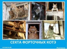 Секта котов -форточников -2018 - Сектовасия. Новости
