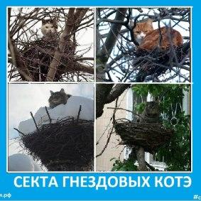 Секта гнездовых котов - Сектовасия